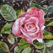 Pink Rose - small, original oil painting, by Vicky Curtin
