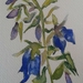 Campanula Flower - small original watercolour painting, by Vicky Curtin
