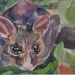 Possum - small original watercolour painting, by Vicky Curtin