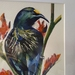 Tui - original watercolour painting, by Vicky Curtin