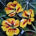 Nasturtium Flowers - original oil painting by Vicky Curtin
