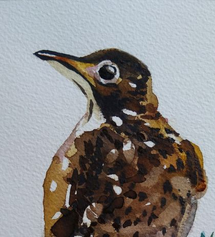 Spotted Thrush Bird - original watercolour, by Vicky Curtin