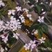 Jasmine - Mini Oil Painting, by Vicky Curtin