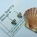 Oxidised Silver Scallop Shell Earrings