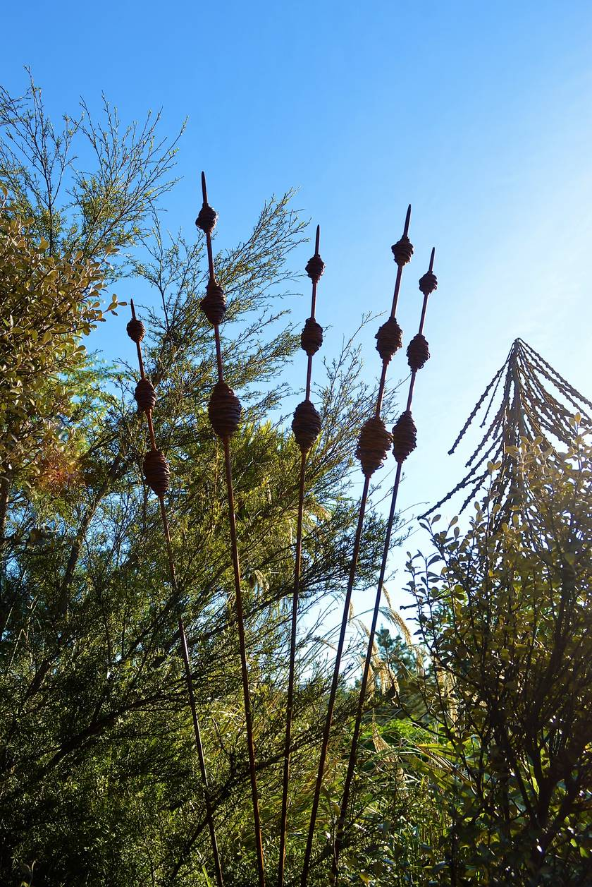 Rusty Seedpods