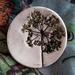 Botanical - Ceramic Brooch