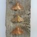 Ceramic Moths - Set of 3