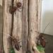 Handmade NZ Weta - copper wire