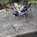 Beautiful beaded spider
