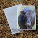 Cow Birthday Card x 4