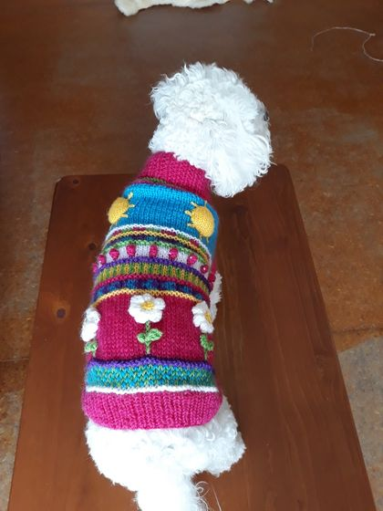 Cheerful Dog Coat - Hand knitted - Wool