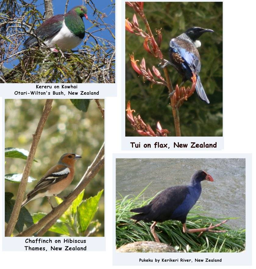 FOUR Wildlife Photo Greeting Cards with Envelopes, Birthday, Graduation, Wedding, Celebration, Christmas, Mother's Day, free shipping