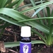 100% Pure NZ Essential Oil of Lavender