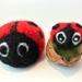 Walnut ladybug mother and baby