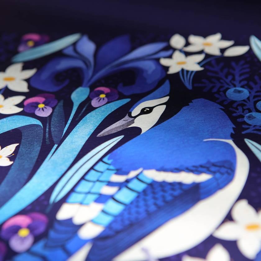A3 Canadian Blue Jays — Fine Art Giclee Print