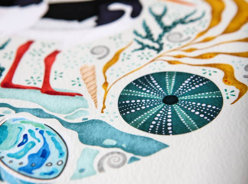 A2 Oystercatchers, Paua & Kina — Fine Art Giclee Print