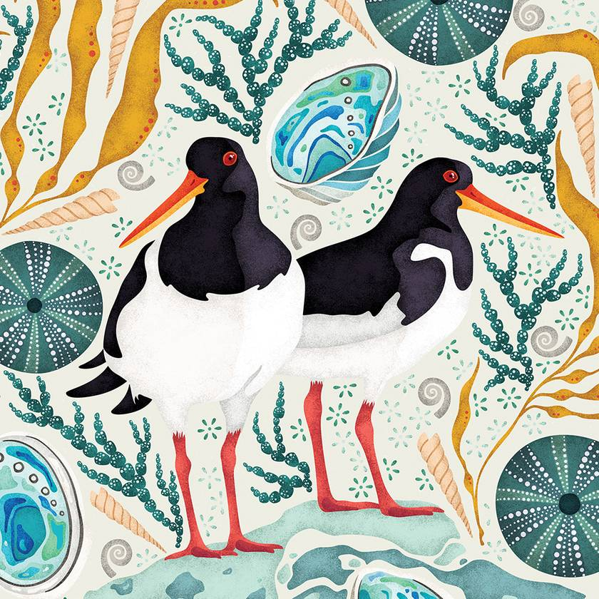 A3 Oystercatchers, Paua & Kina — Fine Art Giclee Print