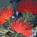 A3 Pohutukawa — Fine Art Giclee Print