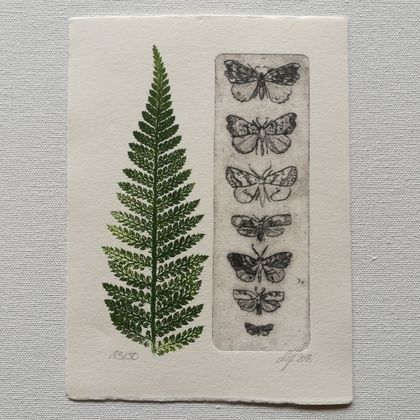 Native moths and Ponga, original intaglio print on cotton paper