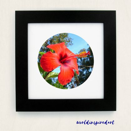 Hibiscus (framed)