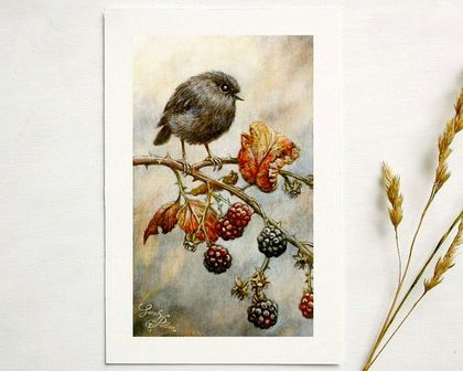 Black Robin Art Print - NZ Birds