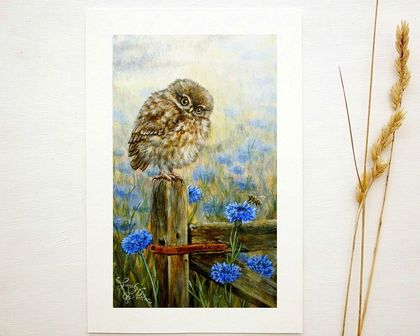 NZ Little Owl Print - Bird Art - Mini Prints