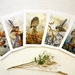 Greeting Cards - Native Birds - NZ Art Gift Set