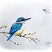 A4 Art Print - Kingfisher & Dragonfly - NZ Bird Art