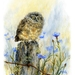 A4 Print - Baby Morepork Owl - NZ Art Prints