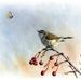 A4 Print - Grey Warbler & Butterfly - NZ Birds Wall Art