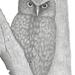 Morepork / Ruru / Owl Print