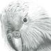 Kakapo B&W Print