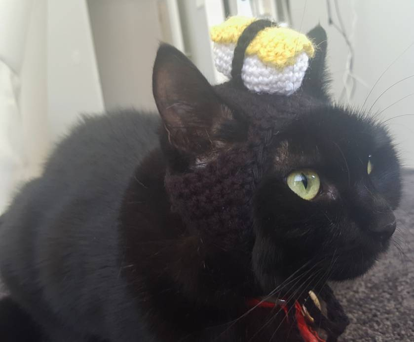 Sushi Egg Hat for Cats