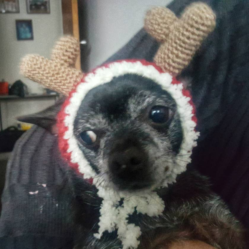 Christmas Hat For Chihuahua