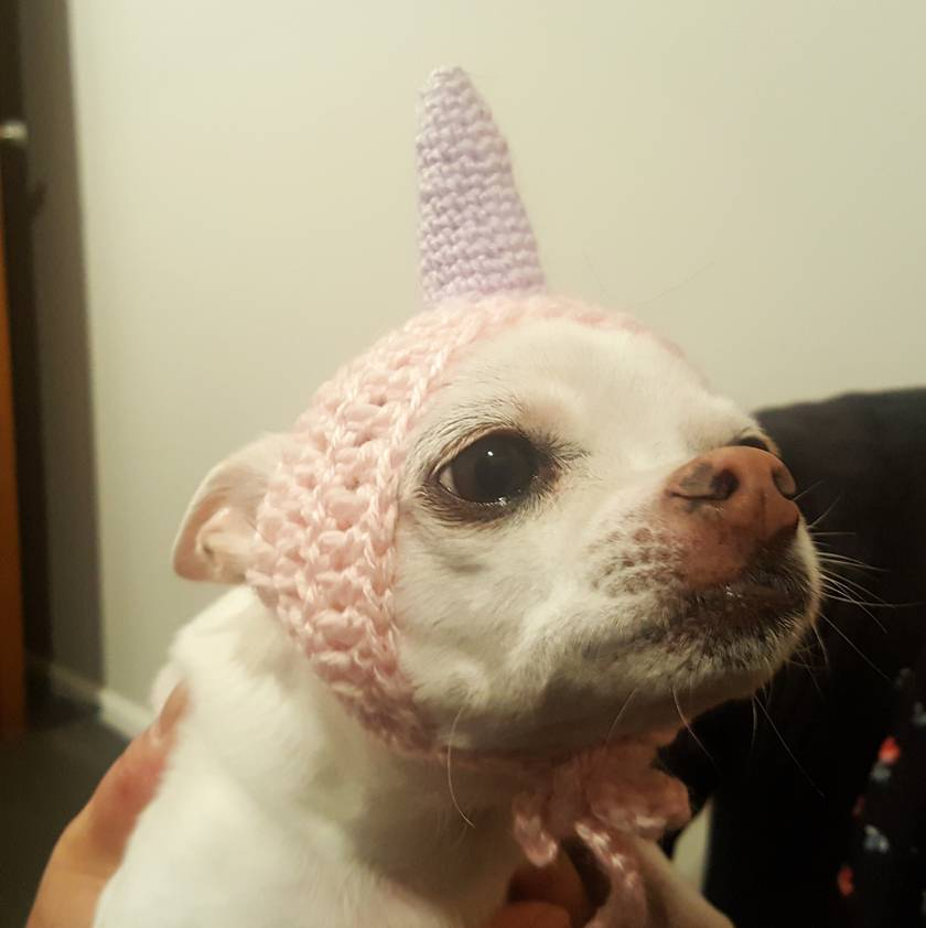 Unicorn Hat for small dogs