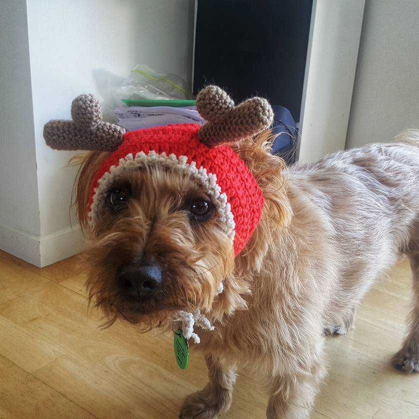 Christmas Hat for S/M Size Dog