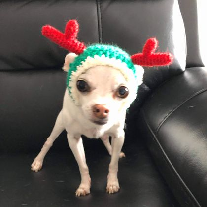 Christmas Hat For Chihuahua( Green)