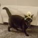 Santa's Helper Christmas Hat for Cats