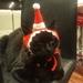 Christmas Santa Hat for Cats