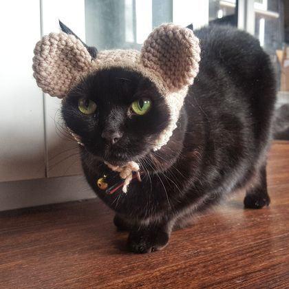 Big Bear Ears Hat for Cat