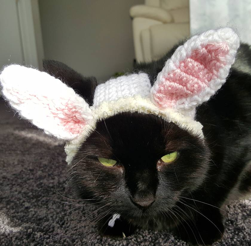 Bunny Hat for Cat