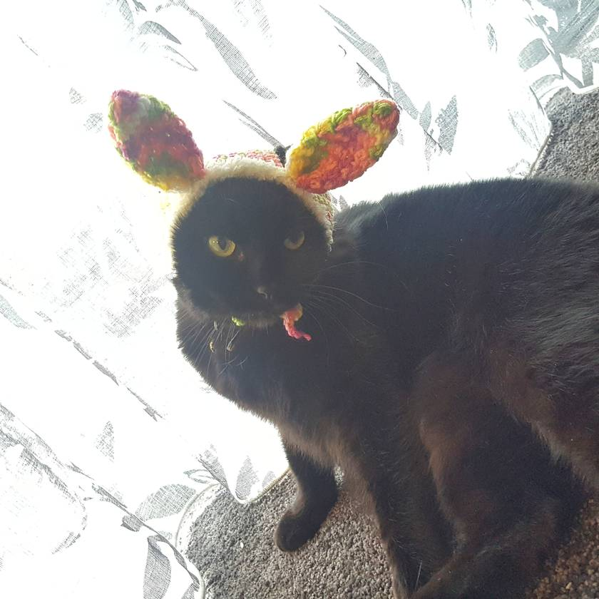 Colourful Bunny Hat for Cat