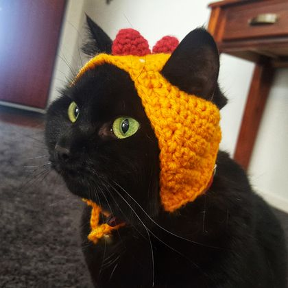 Dinosaur Hat for Cat