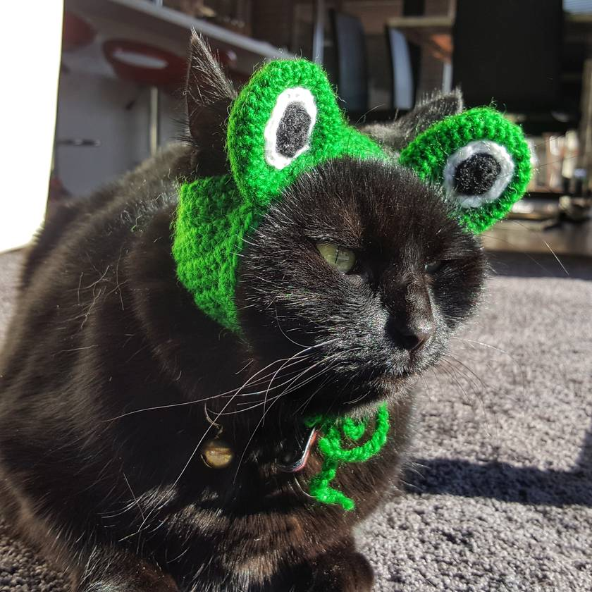 Green Frog Hat for Cat