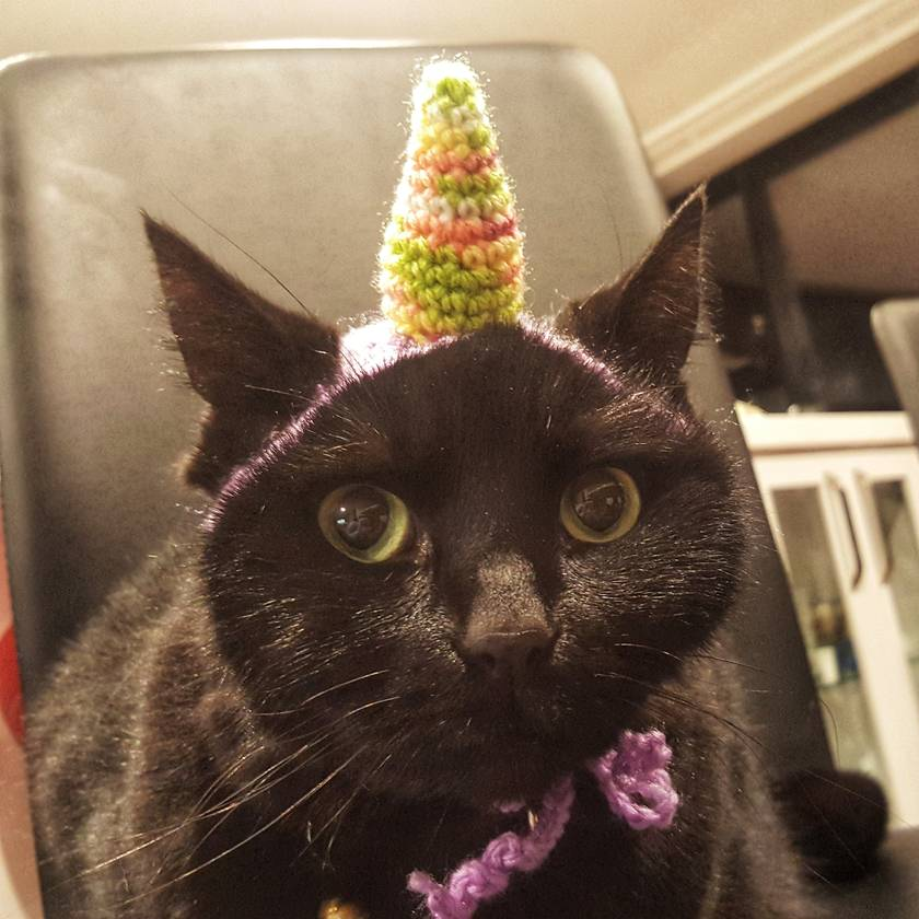 Colourful Unicorn Hat for Cat