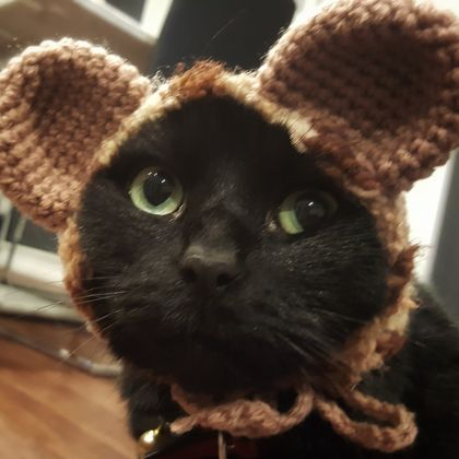 Cute Bear Hat for Cat
