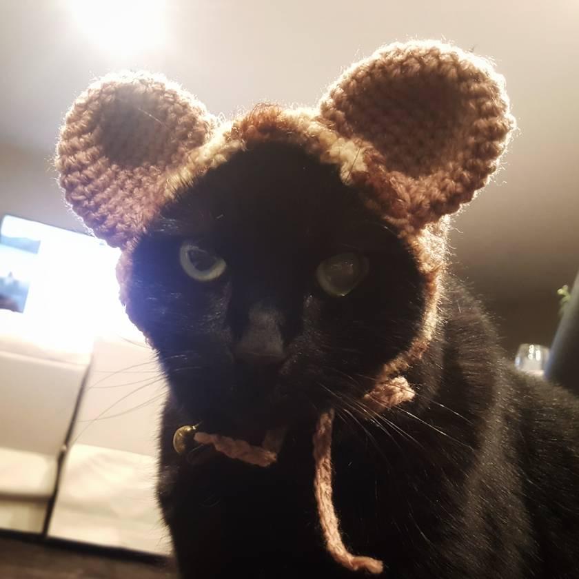 Cute Bear Hat for Cat