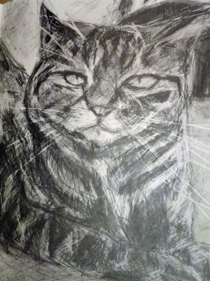 Custom Portrait of your Pet in Graphite or Charcoal