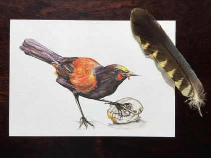 Native Saddleback and Defeated Rat: Art Print