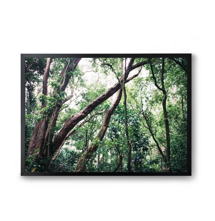Nature | Tuhua - Fine Art Photography Print